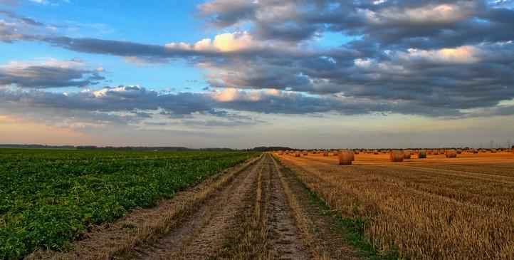 concurso MAPA, ministério da agricultura, pecuária e abastecimento